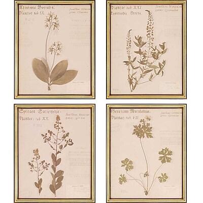 Paragon Botanicals by Shores 4 Piece Framed Graphic Art Set