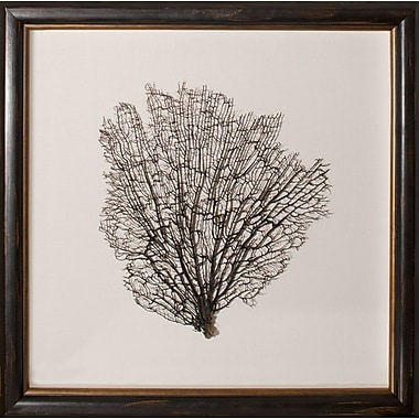Mirror Image Home Large Natural Sea Fan Framed Graphic Art; Oyster/Ebony/Gold