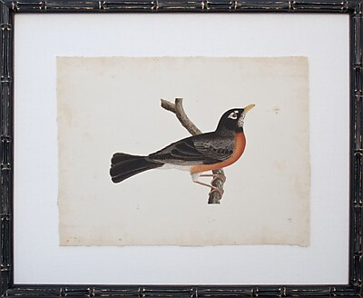 Mirror Image Home Vintage Bird III Framed Graphic Art
