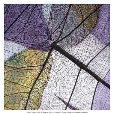 Evive Designs Purple and Grey Leaves II by Jim Christensen Photographic Print