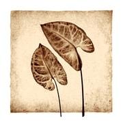 Evive Designs Tropical Caladiums by Michael Mandolfo Photographic Print