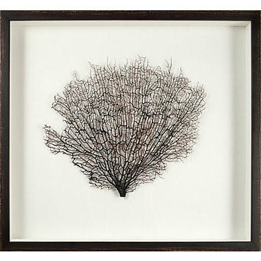 Mirror Image Home Large Natural Sea Fan Framed Graphic Art; Oyster/Brown