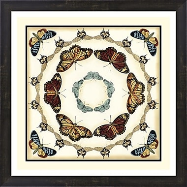 Evive Designs Butterfly Collector II by Chariklia Zarris Framed Graphic Art