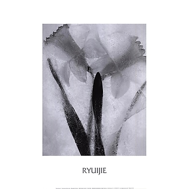 Evive Designs Twins Forever by Ryuijie Photographic Print