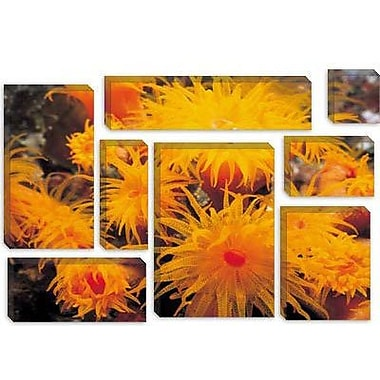 iCanvas Marine and Ocean Cup Coral Photographic Print on Canvas; 8'' H x 12'' W x 0.75'' D