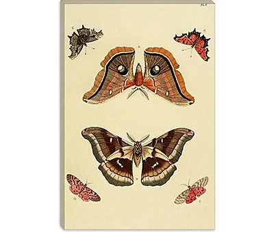 iCanvas 'Plate 5' by Cramer and Stoll Graphic Art on Canvas; 40'' H x 26'' W x 1.5'' D