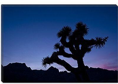 iCanvas 'Desert Silence' by Dan Ballard Photographic Print on Canvas; 8'' H x 12'' W x 0.75'' D
