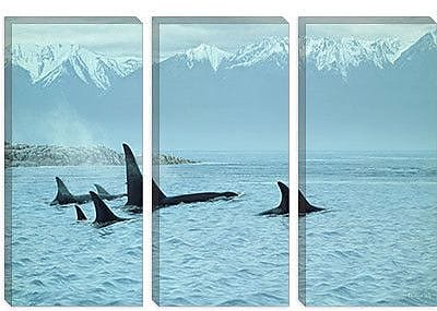 iCanvas ''Silent Passage - Orcas'' by Ron Parker Photographic Print on Wrapped Canvas