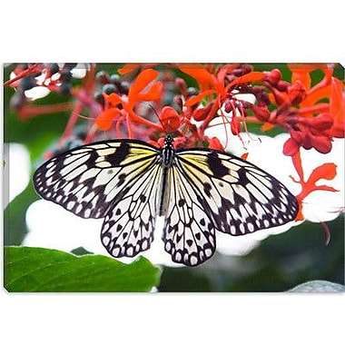 iCanvas White Butterfly Photographic Print on Wrapped Canvas; 18'' H x 26'' W x 0.75'' D