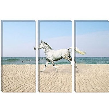 iCanvas 'White Horse on the Beach' by Bob Langrish Photographic Print on Wrapped Canvas