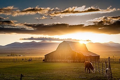iCanvas ''Wet Mountain Barn l'' by Dan Ballard Photographic Print on Wrapped Canvas