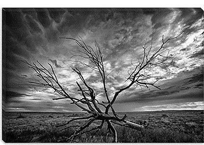 iCanvas 'Colorado Storm' by Dan Ballard Photographic Print on Canvas; 26'' H x 40'' W x 1.5'' D