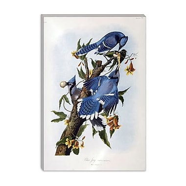 iCanvas 'Blue Jay' by John James Audubon Painting Print on Canvas; 26'' H x 18'' W x 0.75'' D