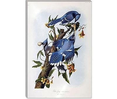 iCanvas 'Blue Jay' by John James Audubon Painting Print on Canvas; 26'' H x 18'' W x 0.75'' D