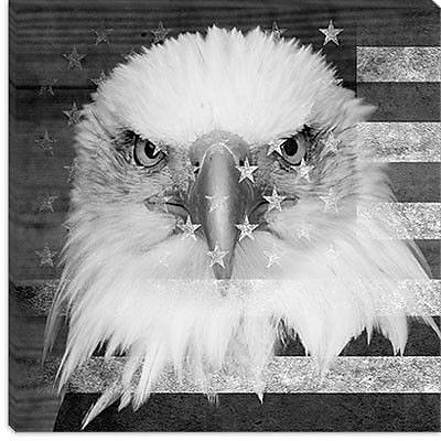 iCanvas Bald American Eagle Graphic Art on Wrapped Canvas in Black; 12'' H x 12'' W x 0.75'' D
