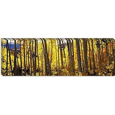 iCanvas Panoramic Aspen Trees Photographic Print on Canvas; 30'' H x 90'' W x 1.5'' D