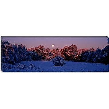 iCanvas Panoramic Snow Covered Forest at Dawn, Denver, Colorado Photographic Print on Canvas