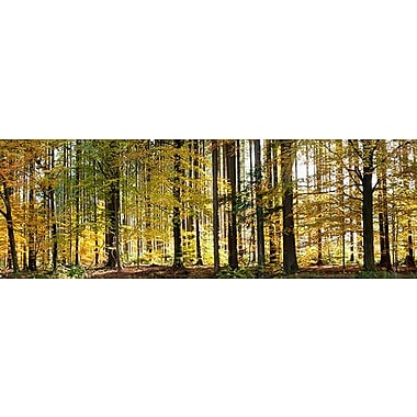 iCanvas Panoramic Trees Photographic Print on Wrapped Canvas; 20'' H x 60'' W x 1.5'' D