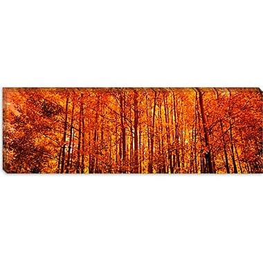 iCanvas Panoramic Aspen Trees at Sunrise Photographic Print on Canvas; 30'' H x 90'' W x 1.5'' D