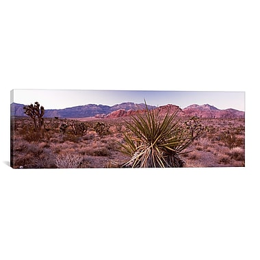 iCanvas Panoramic 'Yucca Plant' Photographic Print on Canvas; 20'' H x 60'' W x 1.5'' D