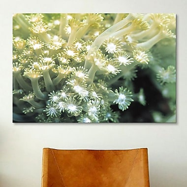 iCanvas Marine and Ocean Goniopora Coral Photographic Print on Canvas; 26'' H x 40'' W x 0.75'' D