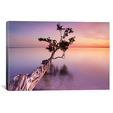 iCanvas ''Water Tree XI'' by Moises Levy Photographic Print on Canvas; 26'' H x 40'' W x 0.75'' D