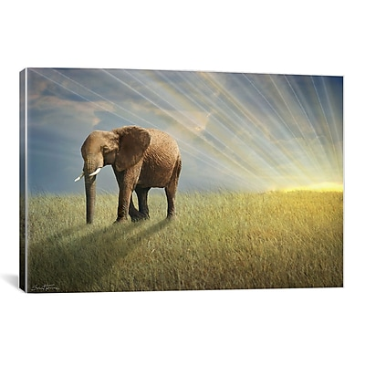 iCanvas ''Walk w/ the Light'' by Ben Heine Photographic Print on Wrapped Canvas