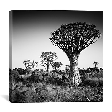 iCanvas Namibia Quiver Trees by Nina Papiorek Photographic Print on Wrapped Canvas