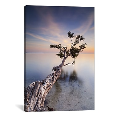 iCanvas 'Water Tree X' by Moises Levy Photographic Print on Canvas; 61'' H x 41'' W x 1.5'' D