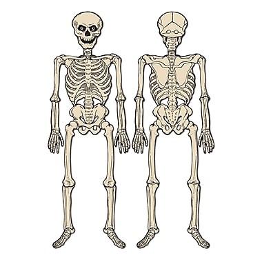 Jointed Skeleton, 4' 3