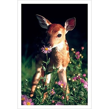 Fawn, Stretched Canvas, 24