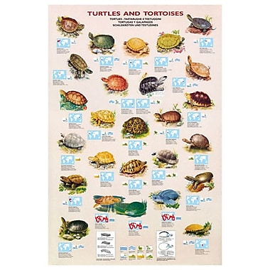 Turtles and Tortoises, Stretched Canvas, 24