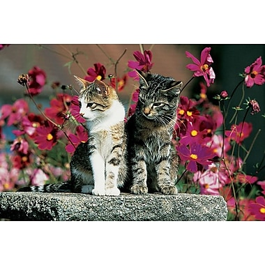 Two Cats On A Pedastal, Stretched Canvas, 24