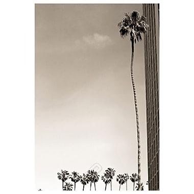 Tall Palm de Settle, toile, 24 x 36 po