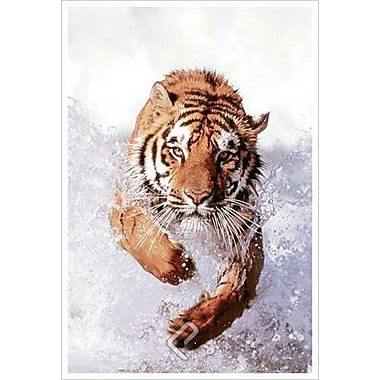 Tiger Running Through Water, Stretched Canvas, 24
