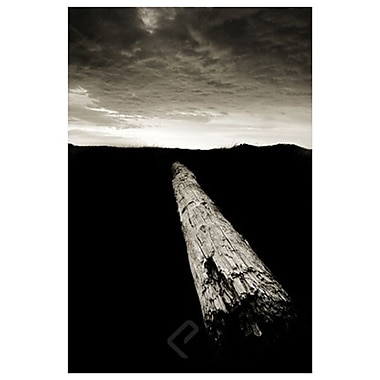 Dead Log Floras Lake by Settle, Canvas, 24