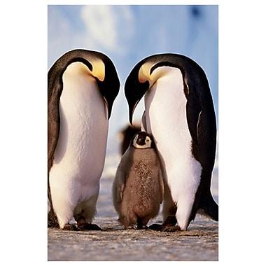 Famille de pingouins, toile tendue, 24 x 36 po
