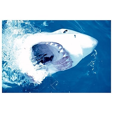 Great White Shark I, Stretched Canvas, 24