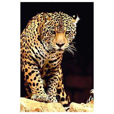 Leopard, Big Cats, Stretched Canvas, 24