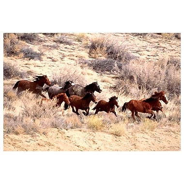Mustang Horses Running Wyoming, Stretched Canvas, 24