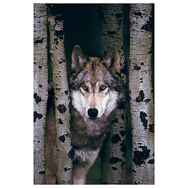 Loup gris, toile tendue, 24 x 36 po
