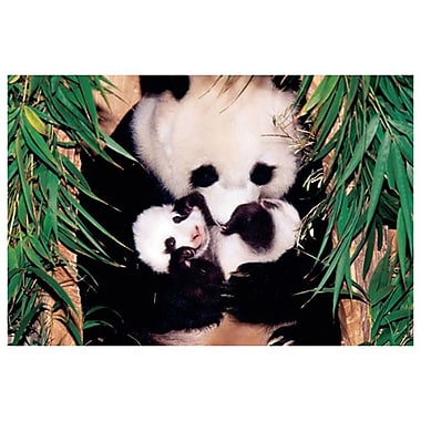 Maman panda et son bébé, toile tendue, 24 x 36 po
