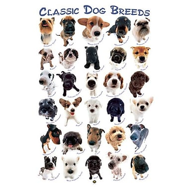 Dog Breeds by HanaDeka, Canvas, 24