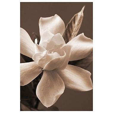 Magnolia In Sepia by Zalewski, Canvas, 24