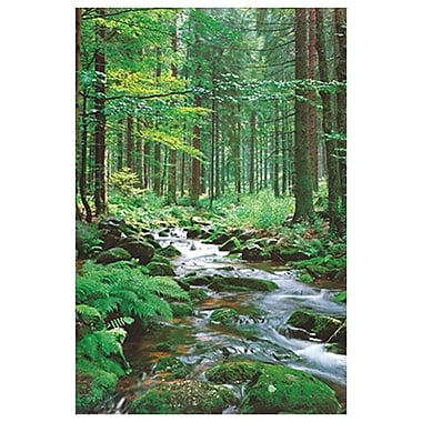 Forest Creek II, Stretched Canvas, 24