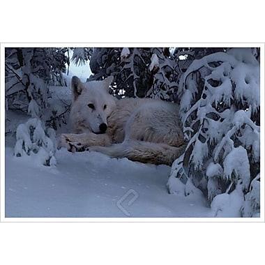Snowy Wolf de Hunziker, toile, 24 x 36 po