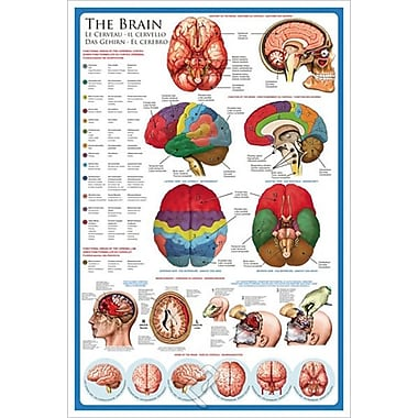 The Brain, Stretched Canvas, 24