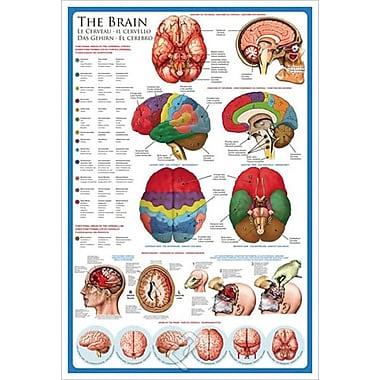 Le cerveau, toile tendue, 24 x 36 po