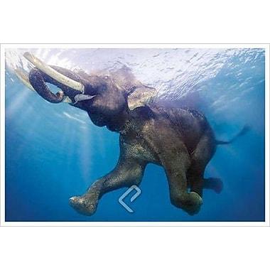 Un éléphant sous l'eau, toile tendue, 24 x 36 po