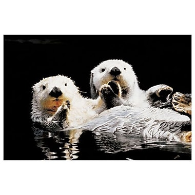 Sea Otters, Stretched Canvas, 24